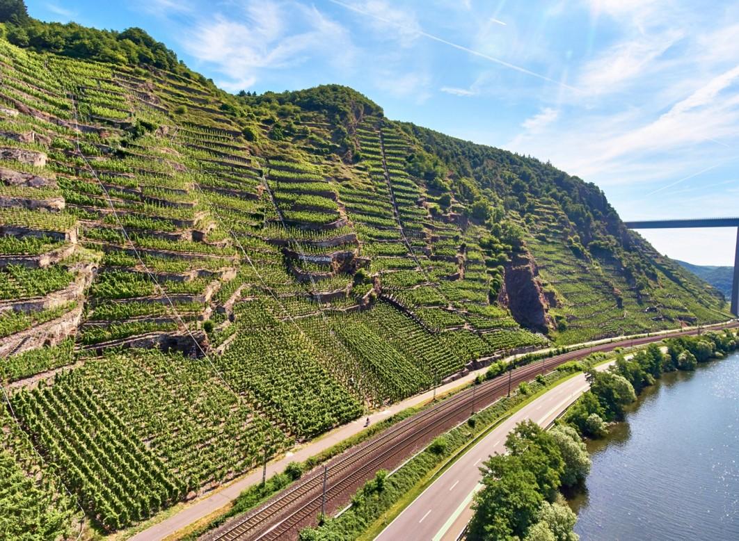 Wines of Germany & Austria