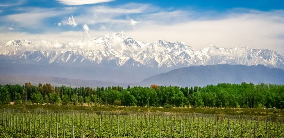 Wines of Argentina & Chile